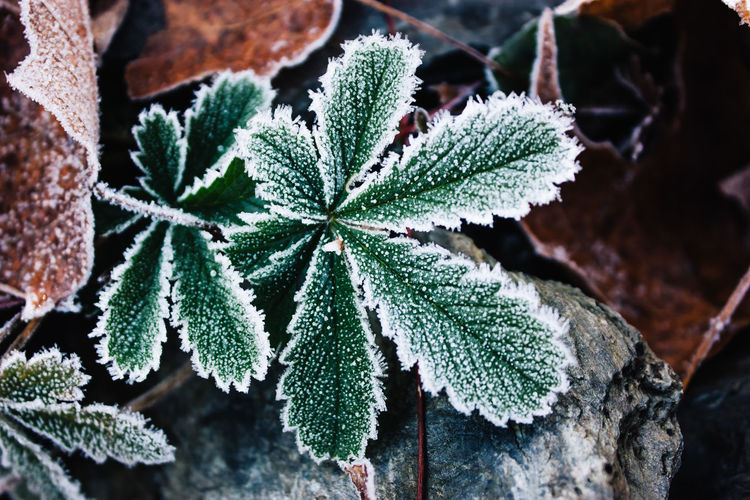 Beauty In Nature Close-up Cold Temperature Day Focus On Foreground Fragility Freshness Frost Frozen Green Color Growth Leaf Nature No People Outdoors Plant Snow Winter