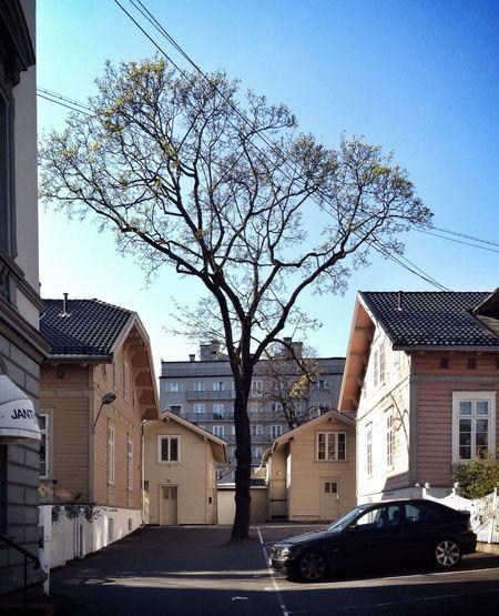 Citytree no. 22