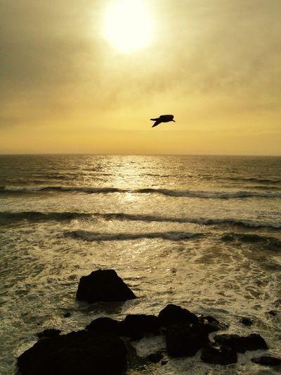 Sunset Beach Photography Birds In Flight EyeEm Birds