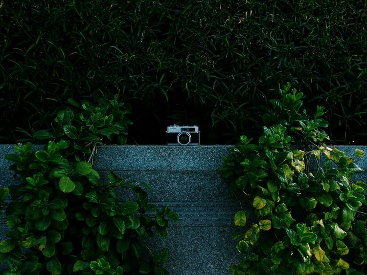 // in the wild // & here is the vintage camera finding the way out from the jungle to shoot the city scapes in Dubai. Shootermag Retro Vintage Linemeetscorner Funny Canon VSCO OpenEdit Nature_collection Perspectives