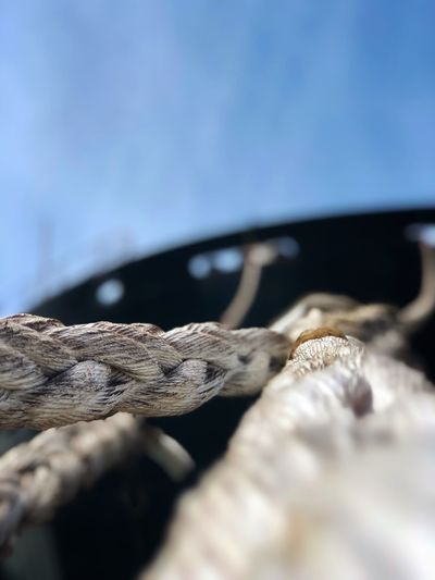 Close-up of rope on wood against sky