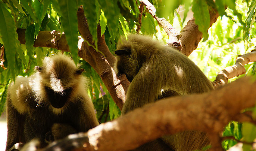 Animal Animal Themes Animals Animals In The Wild Animals In The Wild Branch Day Growth Leaf Mammal Monkey Nature Nature Nature Photography Nature_collection Naturelovers One Animal Outdoors Photography Tree Tree Trees Wild Wildlife Young Animal