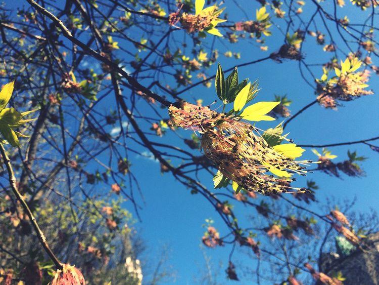 Spring Nature Trees Leaves Flowers Blooming Urban Ukraine Green Simple