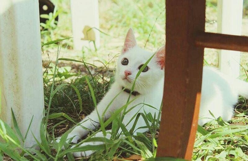 Thomas Cat Lovers Wonderful Beautiful Littlecat  First Eyeem Photo