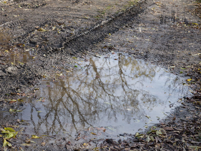 Tire imprint on path / rain puddle with reflection First Eyem Photo Car Dirt Dirt Road Earth Ground Forest Jeep Mirroring Mud Mushy Path Precinct Puddle Ranger Soil Tire Track Trees Water Wet Woods Environment Plant Environmental Issues