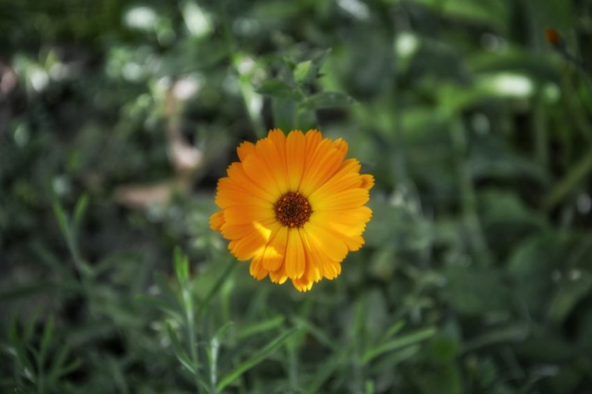 Beauty In Nature Blooming Blossom Botany Close-up Colour Of Life Day Flower Flower Head Focus On Foreground Fragility Freshness Green Color Growth In Bloom Nature No People Orange Color Outdoors Petal Plant Pollen Selective Focus Tranquility Yellow