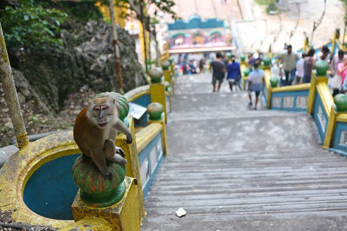 Batu Batu Caves Hindu Limestone Cave Sacred Places Selangor Shrine Stairs Cave Gombak Iconic Iconography Malaysia Monkey Religion Religious Place Temple Tourist Destination Workship