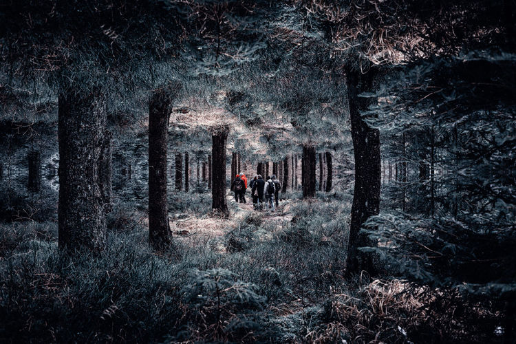 Upside down in a surreal world EyeEm Best Shots EyeEm Nature Lover EyeEm Gallery GERMANY🇩🇪DEUTSCHERLAND@ Harz Mountains, Germany Adult Adults Only Adventure Day Forest Men Mirror Reflection Nature Only Men Outdoor Pursuit Outdoors People Surrealism Surrealist Art Tree Two People Winter Women