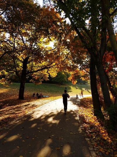 Park Urbanphotography Parklife Urban Lifestyle Togetherness Citylife Park Life Weekend Berlin Good Times Good Autumn Autumn colors Autumn colors Autumn🍁🍁🍁 Tree Full Length Childhood Standing Child Shadow Sunlight Boys Silhouette Sky Long Shadow - Shadow Sunset Fallen Leaf Leaves Fallen