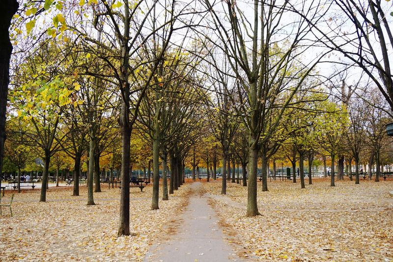 Beauty In Nature Autumn Automne Fall Leaves Jardin Du Luxembourg Trees Walkpath First Eyeem Photo