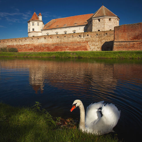 Fagaras Stronghold with a white swan in Fagaras City, Romania. Architecture Brick Wall Romania Transylvania Animal Bird Fagaras Fortification Fortified Wall Historical Lake One Animal Outdoors Stronghold Swan Water White Wild