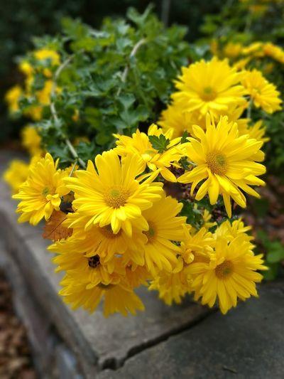 Flower Head Flower Yellow Living Organism Petal Summer Nature Reserve Close-up Plant