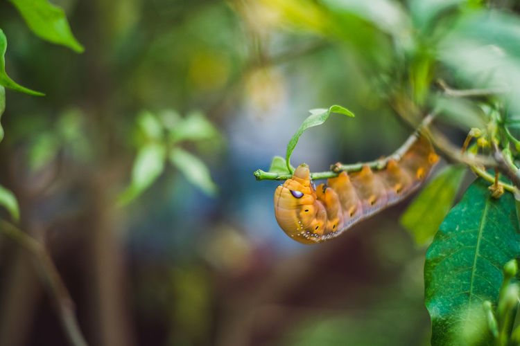 Green tea worm Animal Wildlife Animal Invertebrate Green Color Insect Plant Part Animals In The Wild Caterpillar Nature Leaf Plant Worm