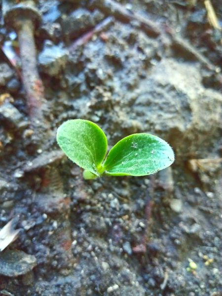 Leaf Growth Plant Nature Green Color No People Fragility Close-up Sapling Freshness Beauty In Nature Outdoors Day Lifestyles Nature Macro_captures Hues Of Life Beauty In Ordinary Things Beauty Of Nature