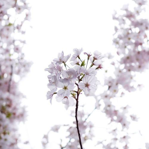 Flower. Flower