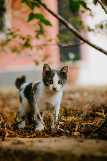 Portrait of cat on field
