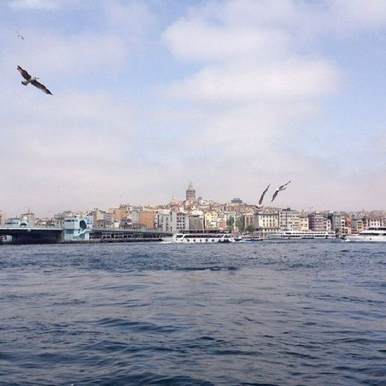 Galatakulesi Galatatower Galatakoprusu Eminönü kopru bridge istanbul marmara seagul marti manzara