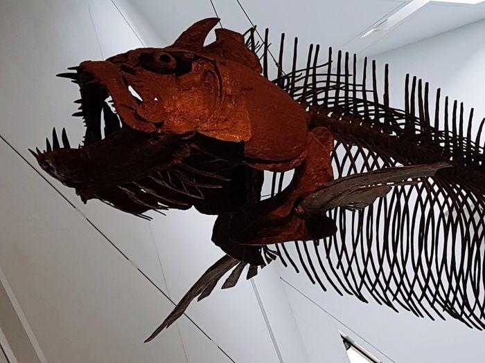 RoyalOntarioMuseum Fossil Dinosaur Bones Dinosaurs Photography Fishbones