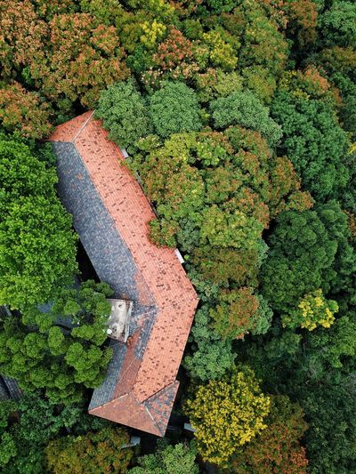 Hangzhou Building Exterior Roof Brick Colorful Colors DJI Mavic Pro City Mountain Autumn Autumn colors Autumn Leaves Leaves High Angle View Grass Green Color Autumn Collection Leaf Change Fall