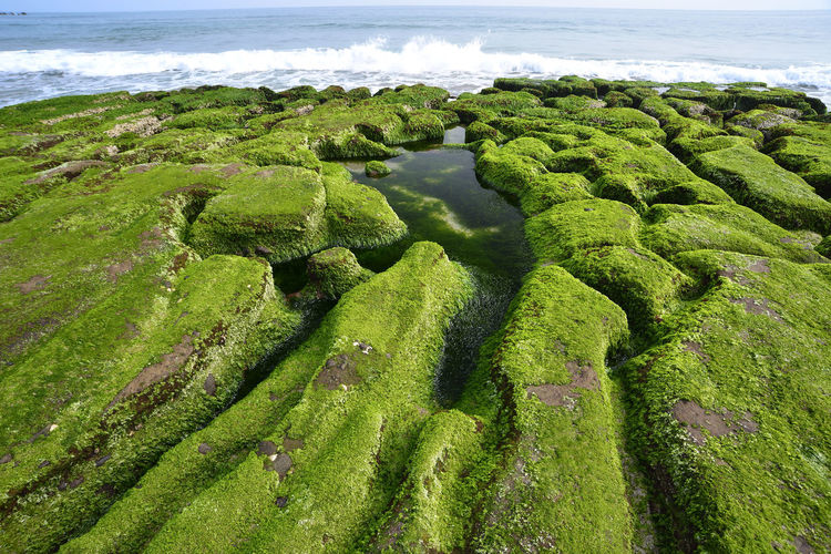 Green rock geological coast landscape Green Algae Beach Beauty In Nature Coastal Day Environment Green Color Growth High Angle View Land Landscape Moss Nature No People Outdoors Plant Reef Rocky Landscape Scenics - Nature Sea Texture Tranquil Scene Tranquility Water