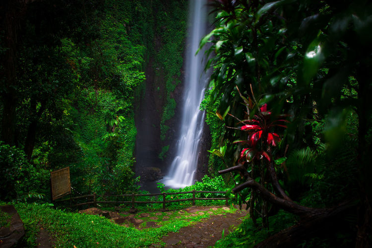 putuk truno Green Gogreen SaveNature Landscape Landscapephotography Longexposures Putuktruno Putuktrunowaterfall Prigen Pasuruan Explorepasuruan Longexposure Waterfall Long Exposure Green Color Water Motion Nature Beauty In Nature Tree Outdoors No People Scenics Travel Destinations Forest