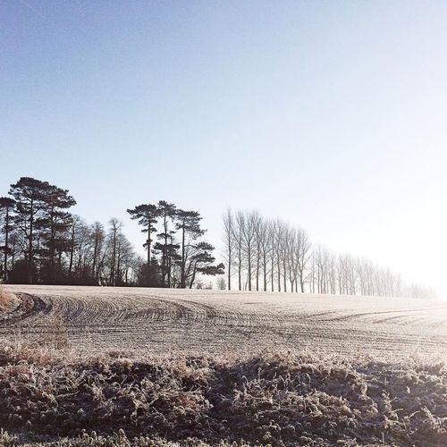 Snow Trees On Hilltop