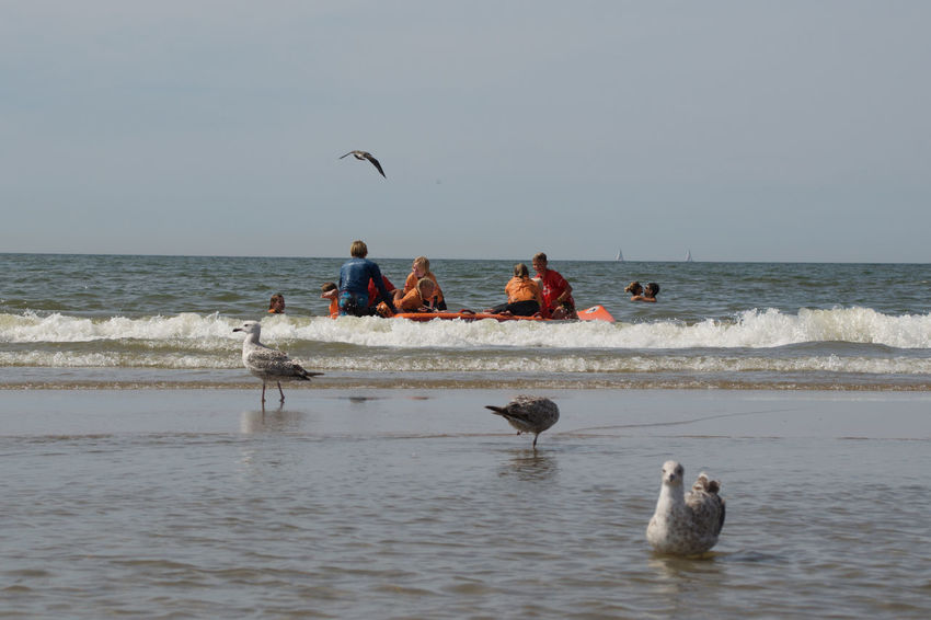 Zandvoort Aan Zee Animal Wildlife Beach Group Of People Horizon Nature Outdoors Sea Seagull Zandvoort