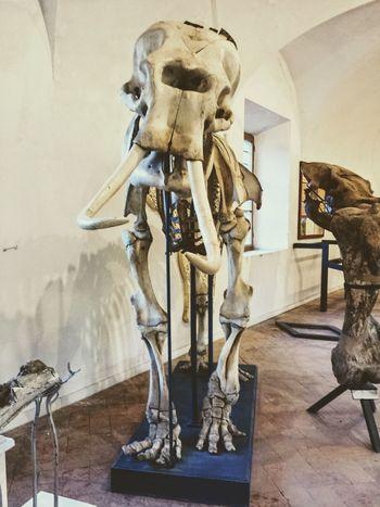 Bones BonesExposed Bonestructure Indoors  Museum Museum Of Natural History No People Science