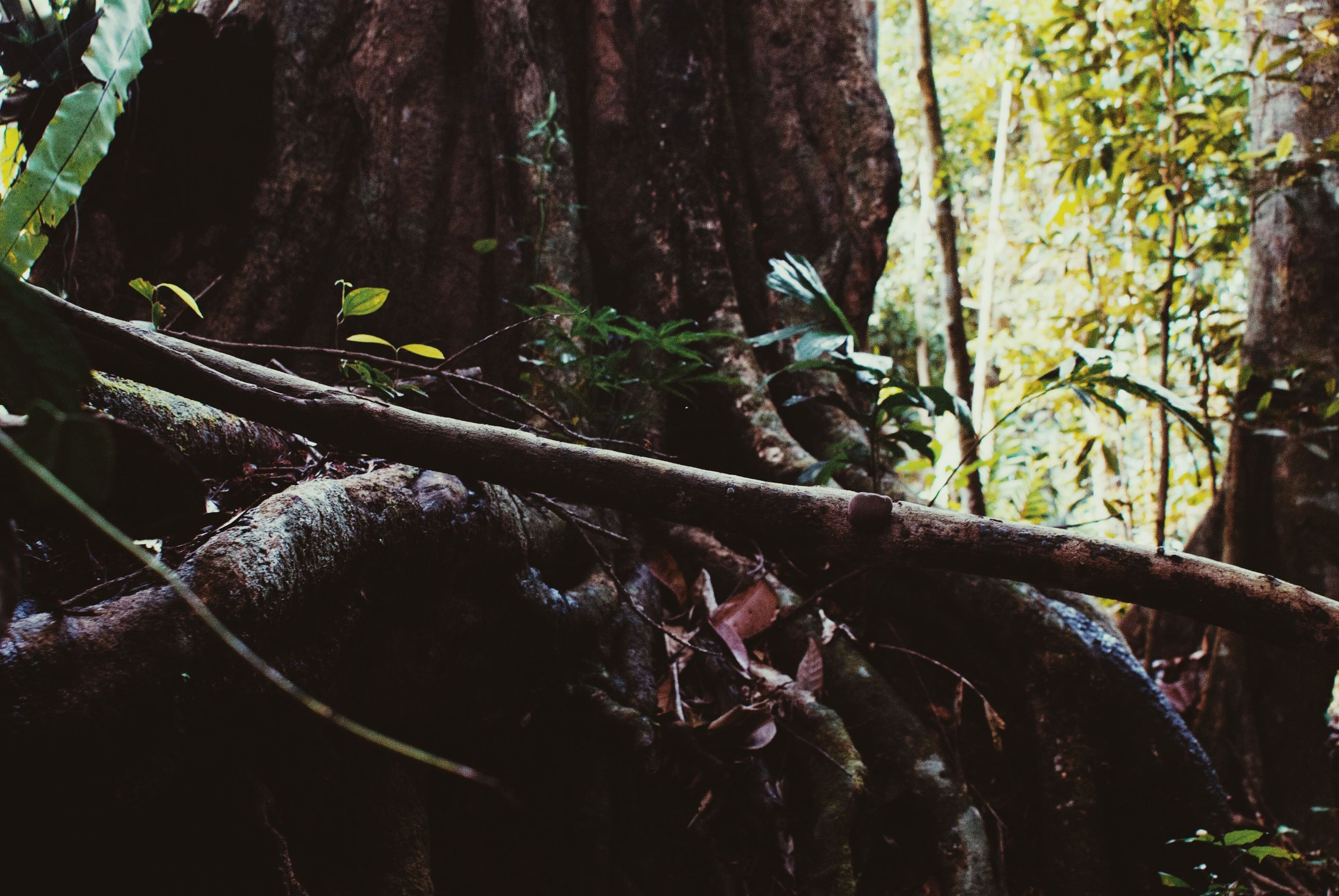 tree, animal themes, forest, animals in the wild, wildlife, branch, tree trunk, nature, one animal, wood - material, growth, outdoors, day, close-up, no people, plant, low angle view, beauty in nature, selective focus, log