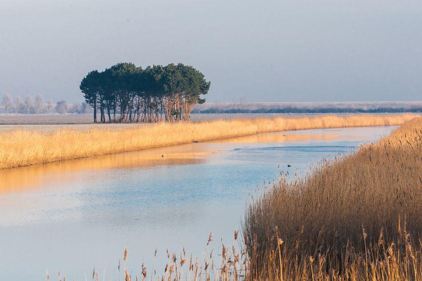 Sony A700 EyeEm Market © The Netherlands Winter Zeeuws Vlaanderen Day Grass Nature Outdoors Plant Reflections In The Water Scenics Sunrise Tranquil Scene Water Zeeland