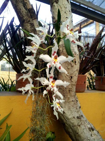Orquidea... Bogota. Nature Flores Orquideas