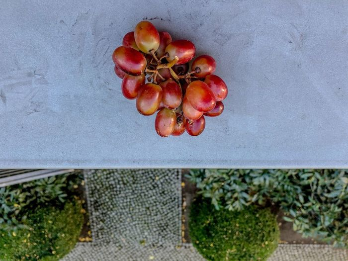 Windowsill Healthy Eating Fruit Food And Drink Food Freshness Plant Red Wellbeing Nature No People Growth Day Outdoors Berry Fruit Ripe High Angle View Architecture Sunlight Directly Above Agriculture