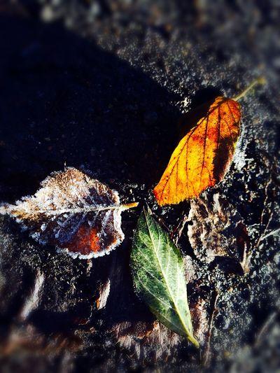 """""""三叶草"""" """"Clover"""" First Eyeem Photo Leaves🌿 Leaves 🍁 Leaves On The Ground Leaves_collection IPhoneography IPhone5 Clover EyeEmNewHere"""