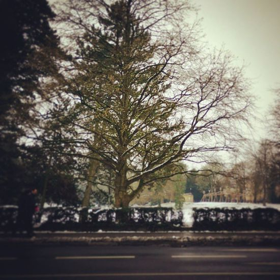 Luxembourg City , Capitals  , Streets , cold, winter, walking, parks, garden, trees