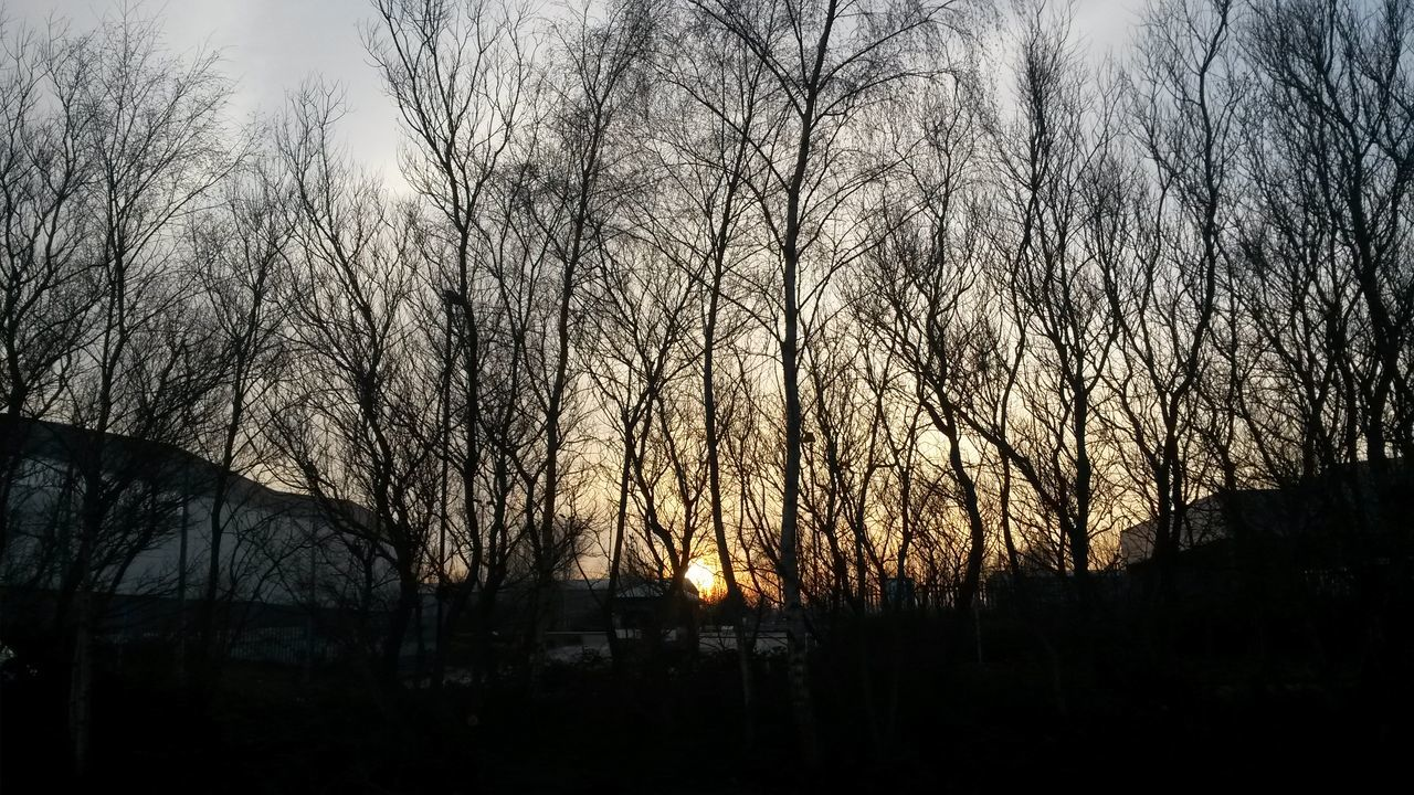 bare tree, tree, no people, nature, sky, beauty in nature, tranquility, outdoors, silhouette, scenics, sunset, branch, day