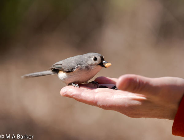 HUNGRY BIRD Animal Themes Animal Wildlife Animals In The Wild Bird Bird Eating Close-up Day Focus On Foreground Holding Human Finger Human Hand Nature One Animal One Person Outdoors Perching