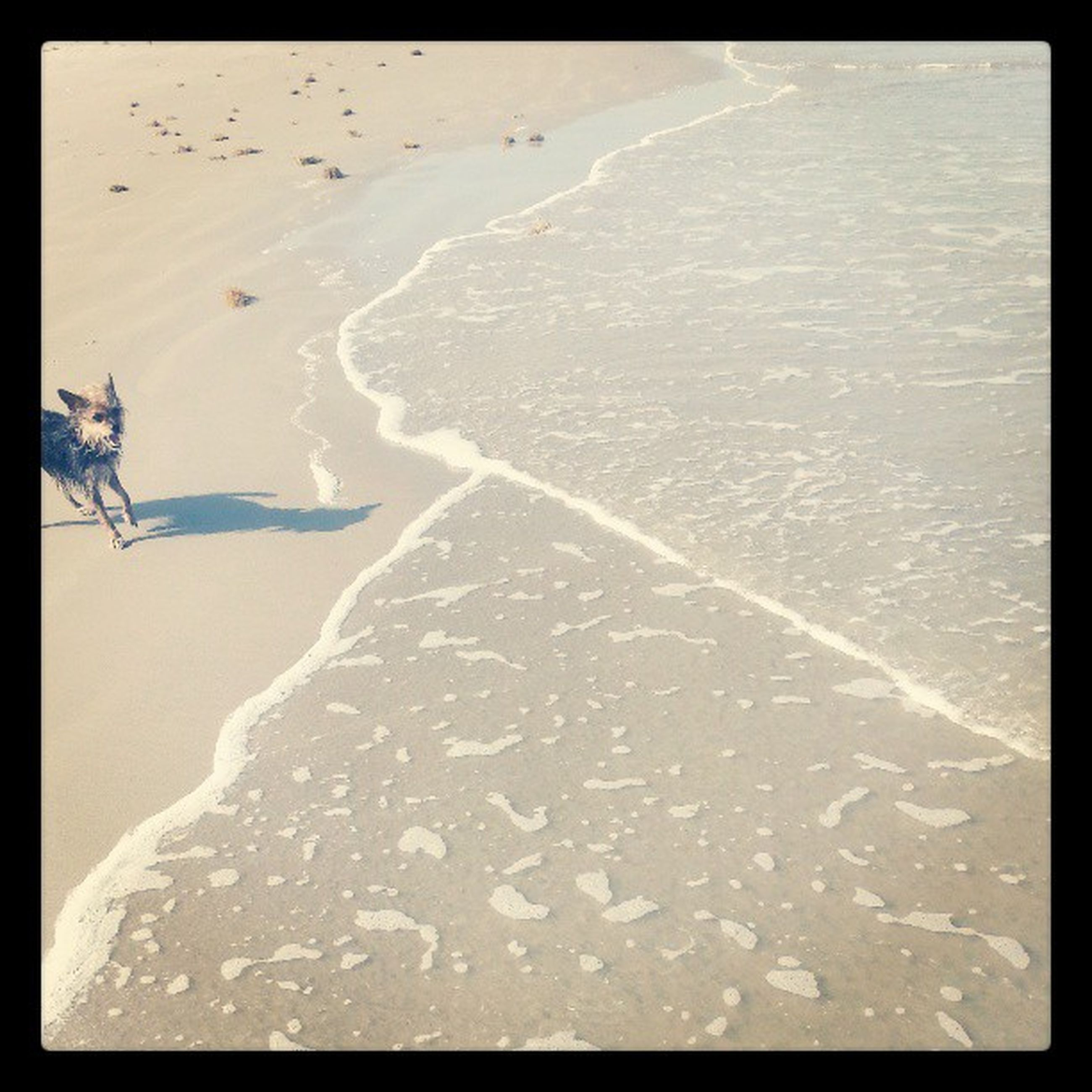 transfer print, auto post production filter, sand, tranquility, snow, nature, cold temperature, footprint, winter, beauty in nature, beach, tranquil scene, water, scenics, high angle view, season, day, landscape, outdoors, weather
