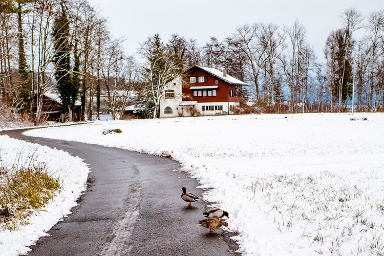 Ducks perching on road by snow covered land during winter