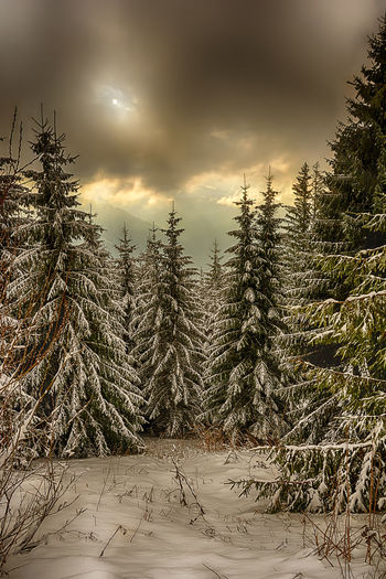 Sunrise over trees Beauty In Nature Cloud Cloud - Sky Cloudy Cold Temperature Covering Field Frozen Growth Landscape Nature Scenics Season  Sky Snow Tranquil Scene Tranquility Tree Weather Winter
