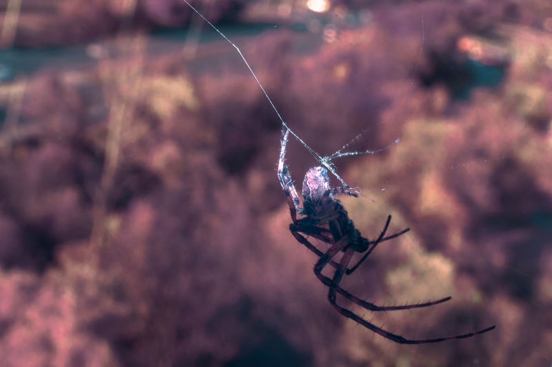 Full Spectrum Spider [FS] Check This Out Exceptional Photographs EyeEm Best Shots Hanging Out Hello World Nature Relaxing Spider Taking Photos Tree Animals Arachnid Arachnophobia Beauty In Nature Close-up Cobweb Day Enjoying Life Landscape Macro No People One Animal Outdoors Spider Web Web