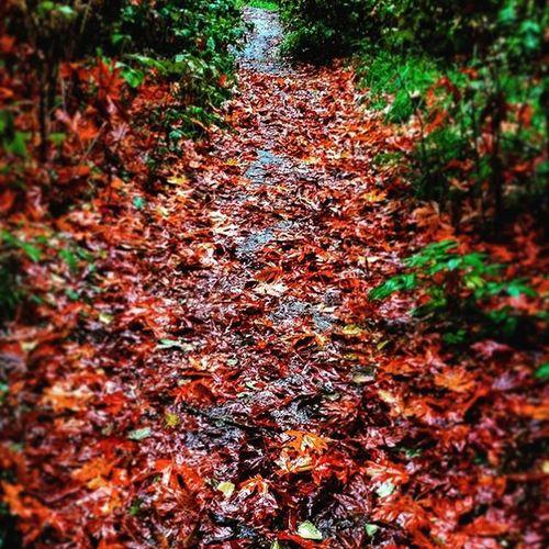 Yep fall is