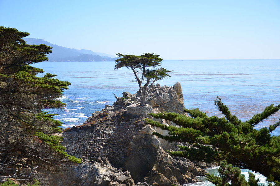 17 Mile Drive Beach Beauty In Nature Blue Clear Sky Day Horizon Over Water Landscape Lone Cypress Nature No People Outdoors Rock - Object Scenics Sea Sky Tree Water