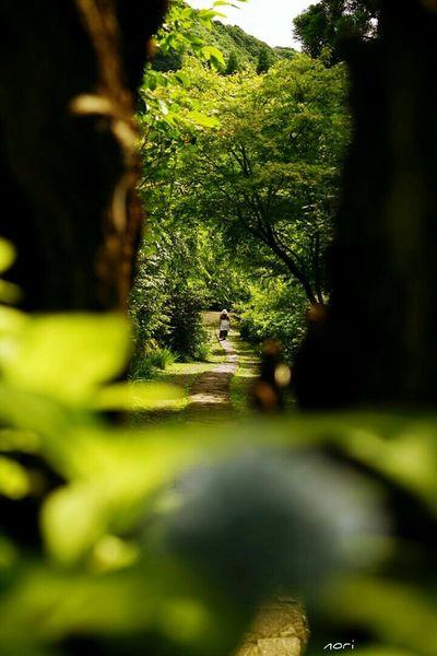 あじさいの里へ… Hydrangea village ボケ味ふぇち 紫陽花2015Photo Light And Shadow Bokeh EyeEm Nature Lover Beautiful Nature Flower Flowers Kagoshima