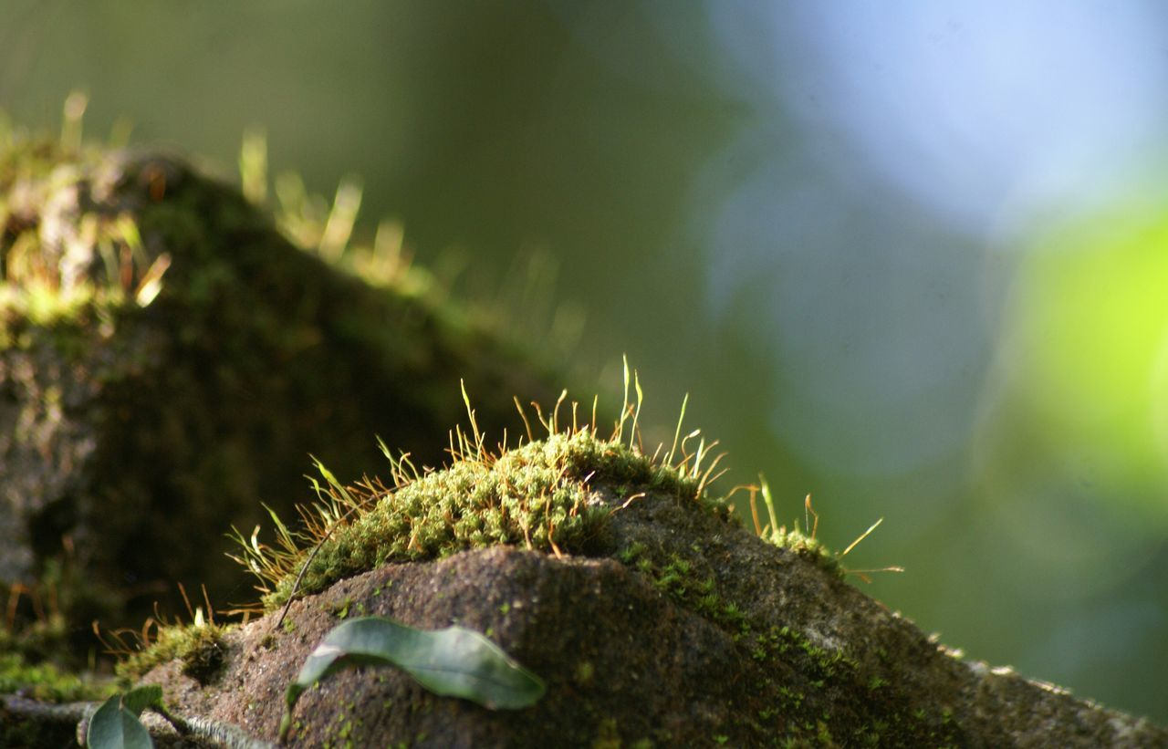 Close-Up Of Moss On Rocks