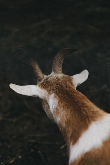 EyeEm Selects One Animal Animal Themes Deer Animals In The Wild No People Mammal Antler Day Close-up Animal Wildlife Nature Outdoors Goat