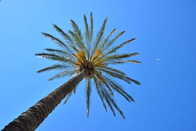 Low angle view of palm tree against clear blue sky during sunny day
