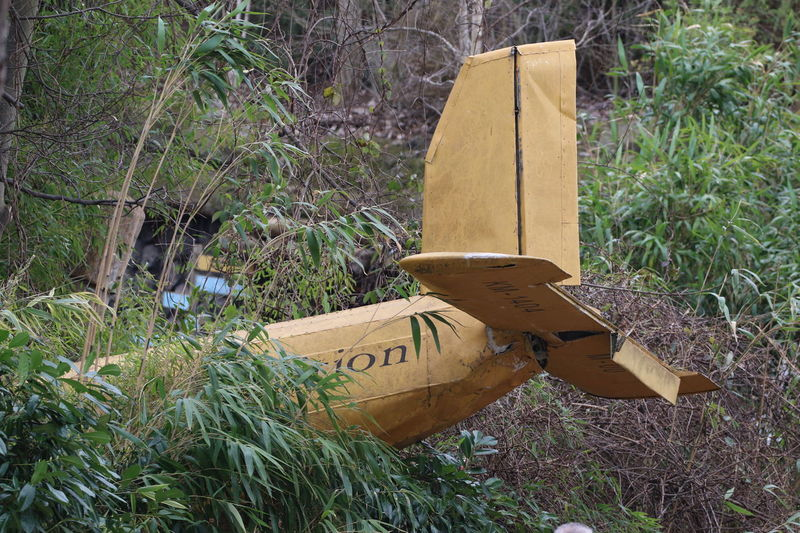 Airplane Tail Crashed Crashed Plane Day Jungle Jungle Landing Lost Nature No People Outdoors