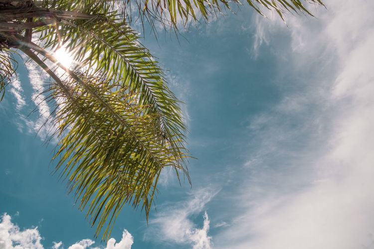 Tree Sky Plant Beauty In Nature Palm Tree Cloud - Sky Tropical Climate Nature Low Angle View Leaf Tranquility No People Day Growth Sunlight Plant Part Outdoors Scenics - Nature Palm Leaf Green Color Coconut Palm Tree Copy Space Backgrounds Vacations Relaxation