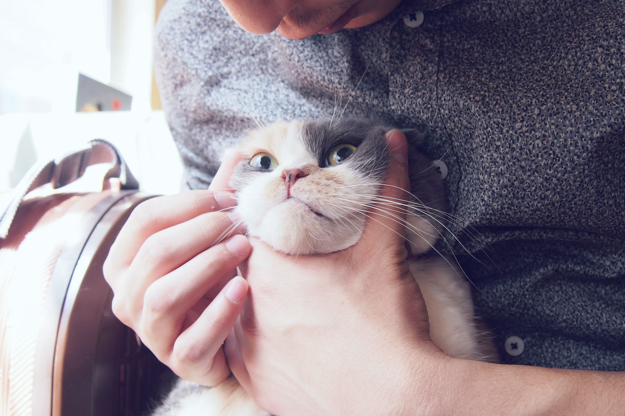 Close-up of hands holding cat