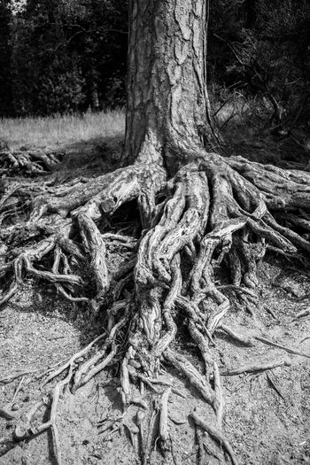 Tree Plant Land Tree Trunk Trunk Root No People Day Rope Strength Forest Nature Tied Up Growth Field Tangled Close-up Outdoors Plant Part Focus On Foreground